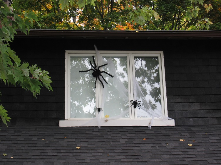 Biggest Fear - Windows with Spiders