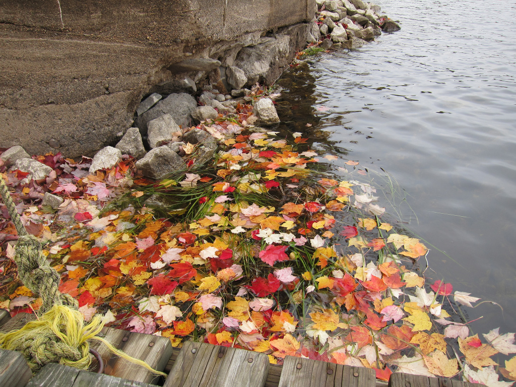 Fall Bucket List - Leaves in Water