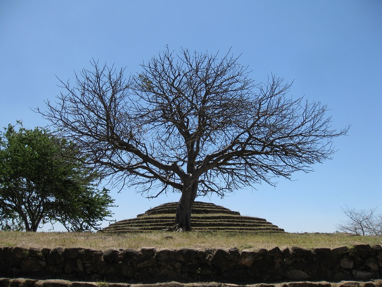 What Makes You Happy -Guachimontones Pyramid with Tree