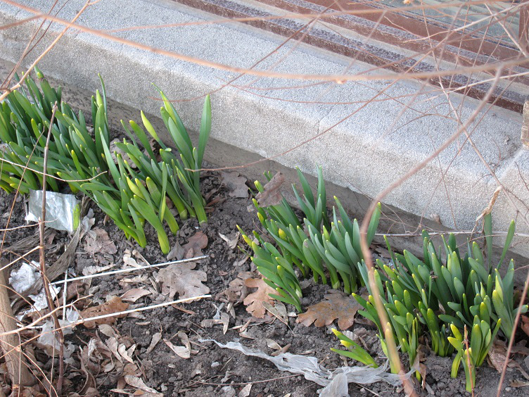 March in Toronto - Buds